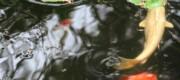 Le relaxant ClaPoti de l'eau